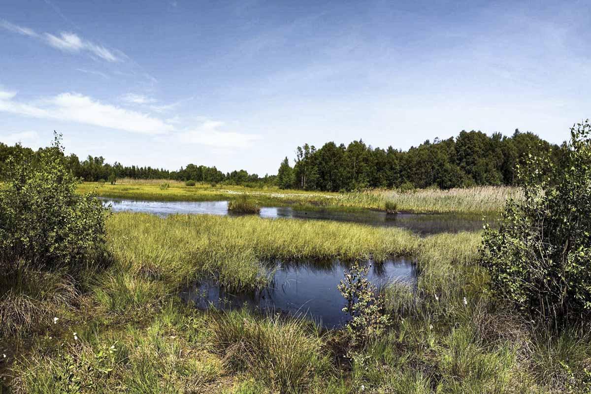 Panorama Sulinger Moor